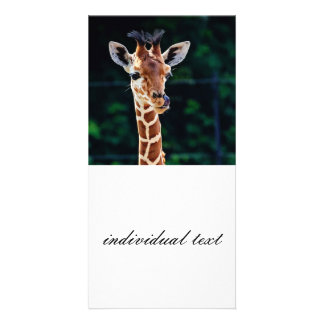 sweet young giraffe personalised photo card