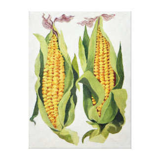 Sweetcorn 2013 canvas print
