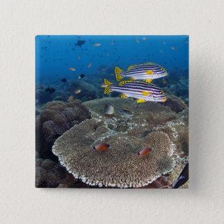 Sweetlip Fish 15 Cm Square Badge