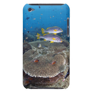 Sweetlip Fish iPod Touch Case