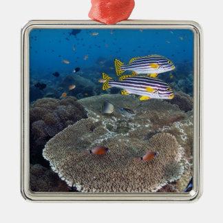 Sweetlip Fish Christmas Ornament