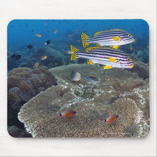 Sweetlip Fish Mouse Mat