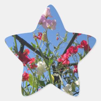 Sweetpea Star Sticker
