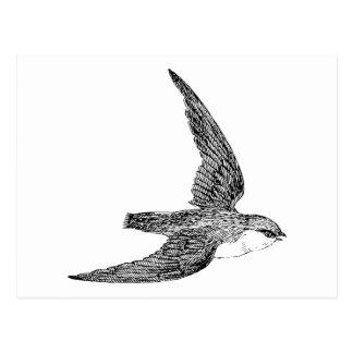 Swift Bird Illustration Post Card
