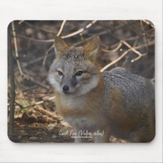 Swift Fox in Forest Wildlife Photo Mousepad