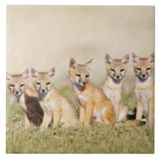 Swift Fox (Vulpes macrotis) young at den burrow, 2 Large Square Tile