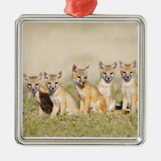 Swift Fox (Vulpes macrotis) young at den burrow, 2 Silver-Colored Square Decoration