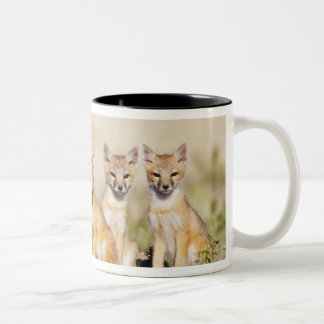 Swift Fox (Vulpes macrotis) young at den burrow, 2 Two-Tone Coffee Mug