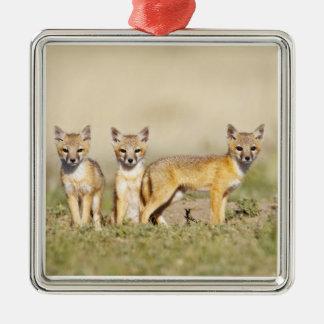 Swift Fox (Vulpes macrotis) young at den burrow, 3 Christmas Ornament