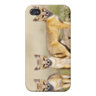Swift Fox (Vulpes macrotis) young at den burrow, 3 Covers For iPhone 4