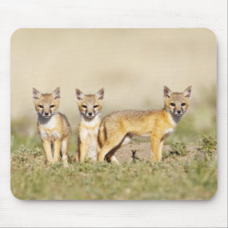 Swift Fox (Vulpes macrotis) young at den burrow, 3 Mouse Mat