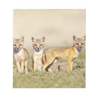 Swift Fox (Vulpes macrotis) young at den burrow, 3 Notepad
