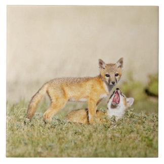 Swift Fox (Vulpes macrotis) young at den burrow, 4 Large Square Tile