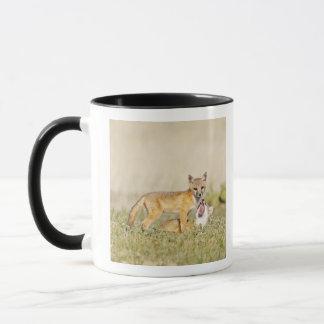 Swift Fox (Vulpes macrotis) young at den burrow, 4 Mug