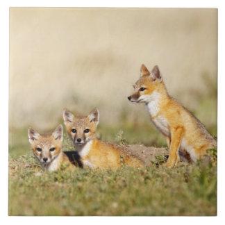 Swift Fox (Vulpes macrotis) young at den burrow, 5 Large Square Tile