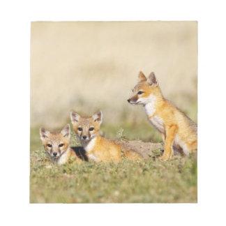 Swift Fox (Vulpes macrotis) young at den burrow, 5 Notepad