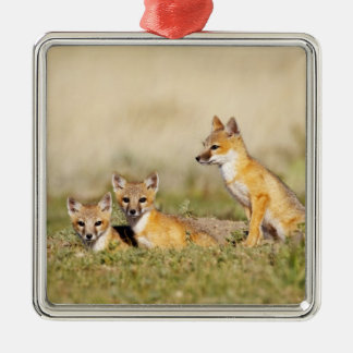 Swift Fox (Vulpes macrotis) young at den burrow, 5 Silver-Colored Square Decoration