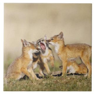 Swift Fox (Vulpes macrotis) young at den burrow, Large Square Tile
