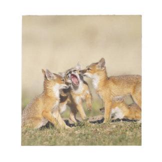 Swift Fox (Vulpes macrotis) young at den burrow, Notepad