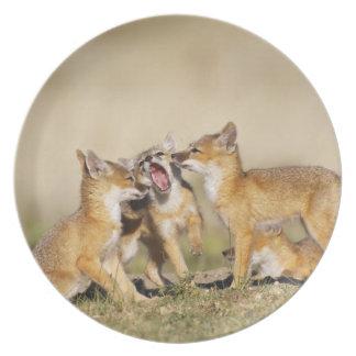 Swift Fox (Vulpes macrotis) young at den burrow, Party Plate