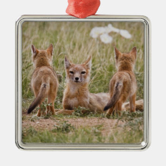 Swift Fox (Vulpes velox) female with young at Silver-Colored Square Decoration