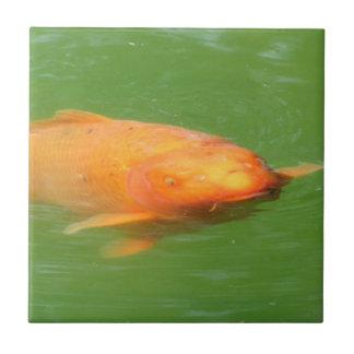 Swim At Me Bro Grumpy Koi Small Square Tile
