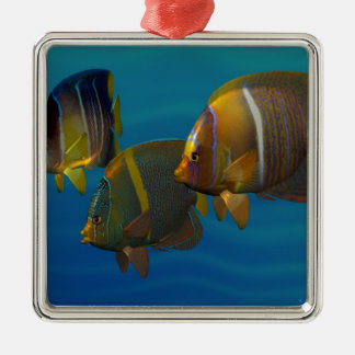 Swimming Angelfish Silver-Colored Square Decoration