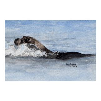 Swimming Baby Seal, Watercolor Poster