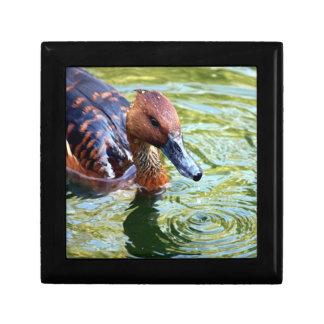 Swimming Duck Jewelry Box