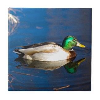 Swimming Duck Small Square Tile
