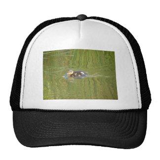 Swimming Duckling Trucker Hats