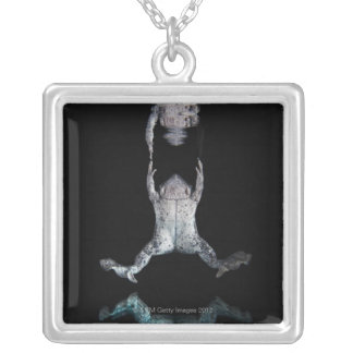 Swimming frog silver plated necklace