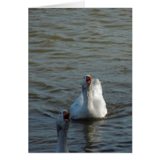 Swimming Geese with Open Mouths Greeting Card