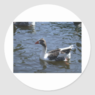 swimming goose stickers
