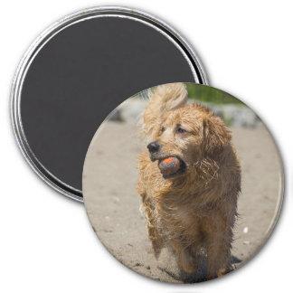Swimming Joey 7.5 Cm Round Magnet