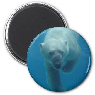 Swimming Polar Bear  Magnet