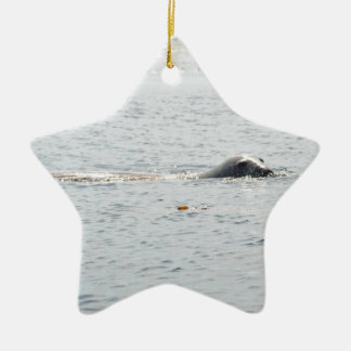 Swimming Seal Ceramic Star Decoration