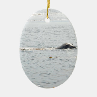Swimming Seal Christmas Ornament