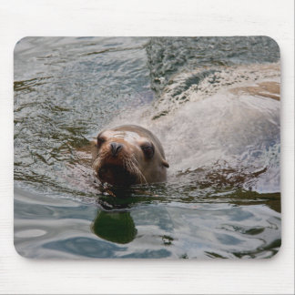 Swimming seal mouse pads