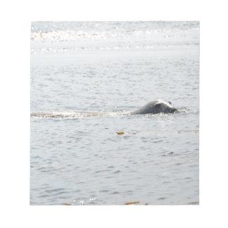 Swimming Seal Notepad
