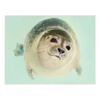 Swimming Seal Postcard
