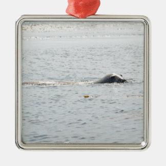 Swimming Seal Silver-Colored Square Decoration