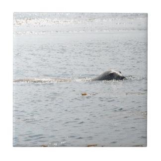Swimming Seal Tiles
