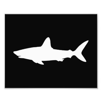 Swimming Shark Photograph