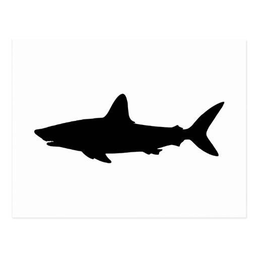 Swimming Shark Postcards