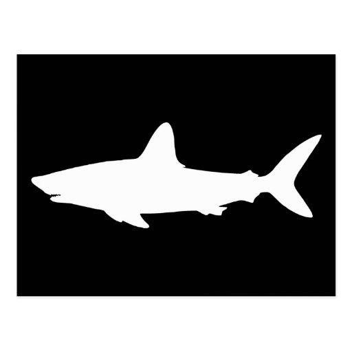 Swimming Shark Post Card