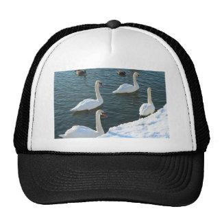 Swimming swans mesh hats