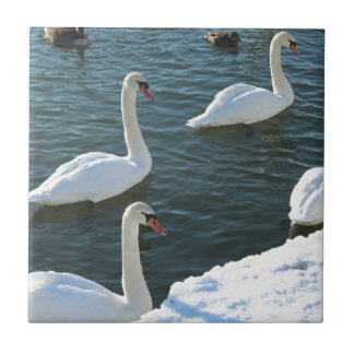 Swimming swans small square tile