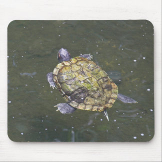 Swimming turtle in Singapore Botanical Garden Mouse Pads