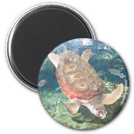 Swimming Turtle Magnet
